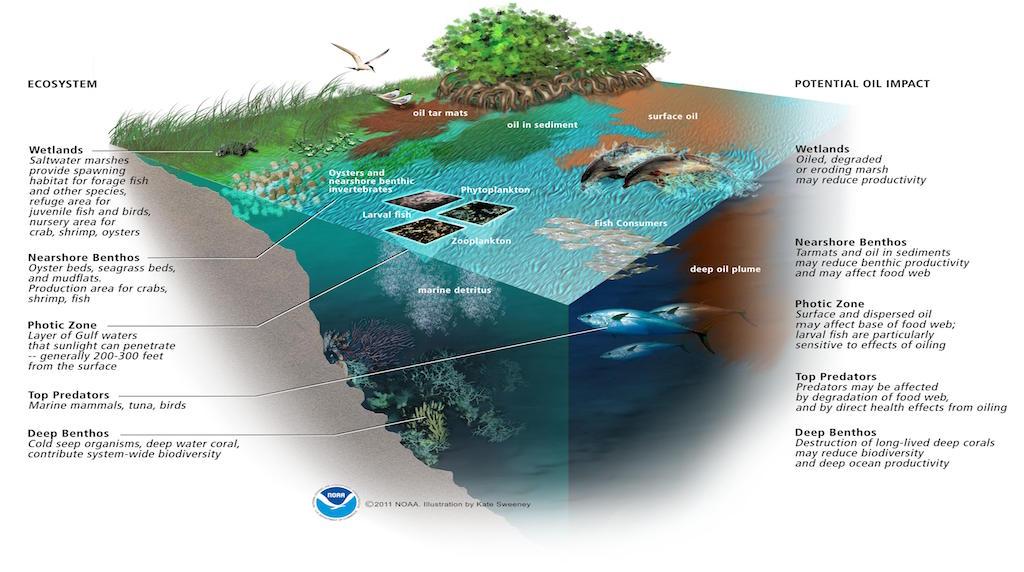 BP's Deepwater Horizon bill tops $65bn