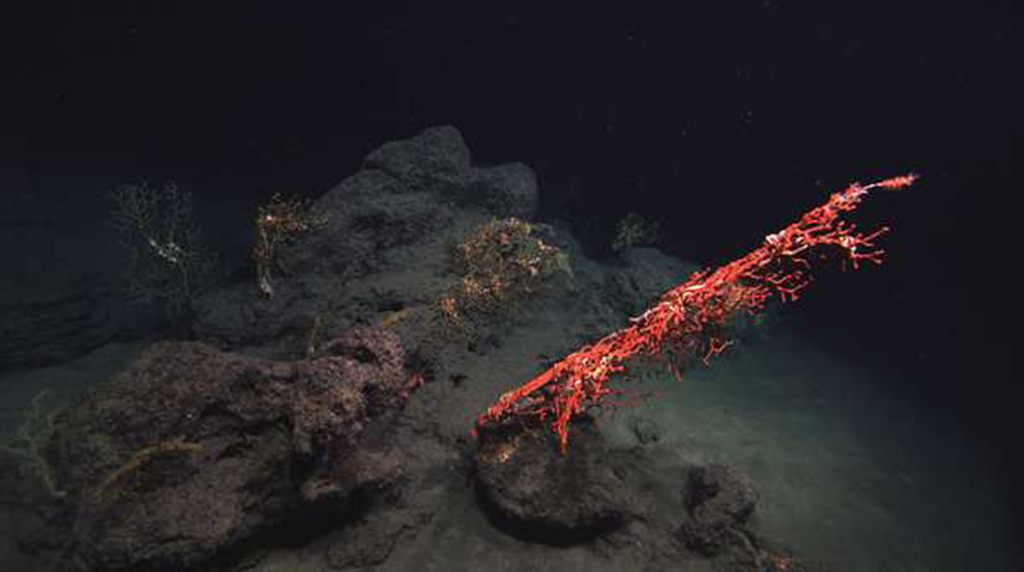 Restoration reaches deepest depths of sea